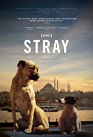 Stray (2020)| Watch Movies Online